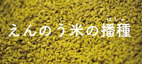 【遠農のもち米】水稲の播種が行われました