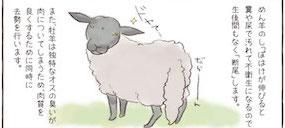 【遠農マンガvol.20】羊が生まれたその後に